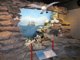 Skellig Experience Bird Watching